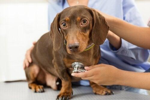 Hvordan bør du ta vare på kjæledyr?