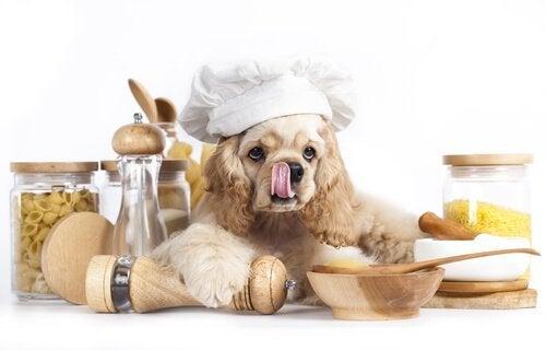 Hund på kjøkkenet