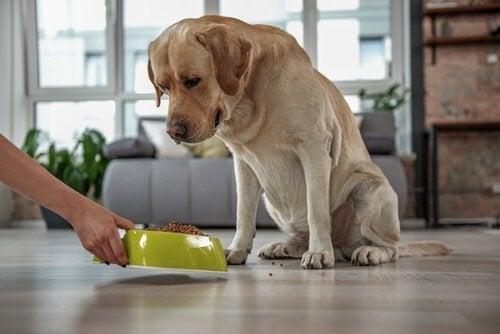 Hvorfor finnes det spesifikk hundemat uten korn ?