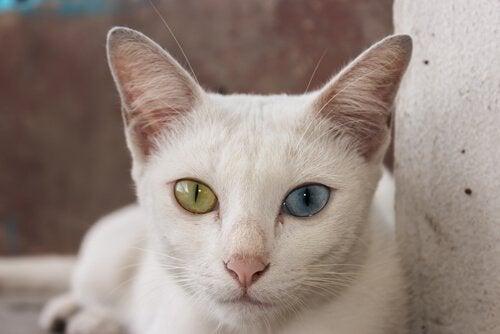 Katt med vakre øyne