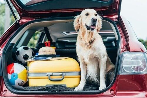 Å ta med kjæledyr på ferie: Tips og hva du bør vite