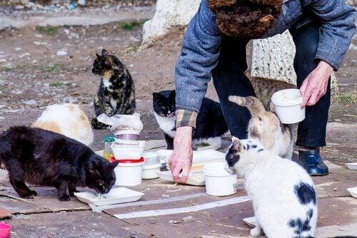 Mate en kattekoloni