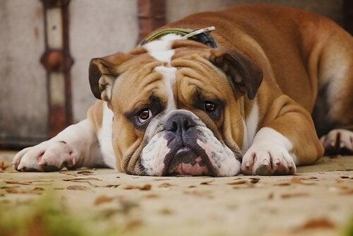 7 ting hunden din hater ved deg
