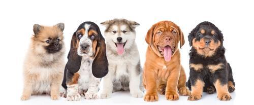 Profiler på Instagram: cachorros
