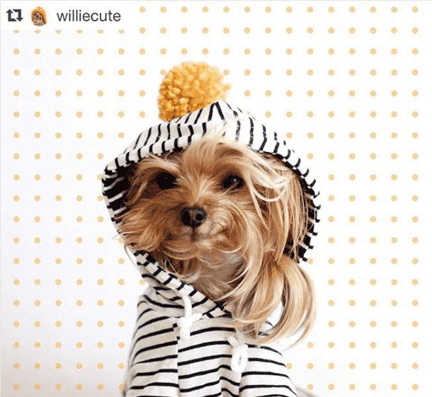 Profiler på Instagram: Williecute