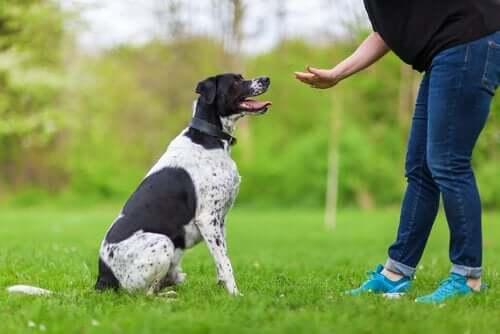 Å anvende psykologi i hundens opplæring