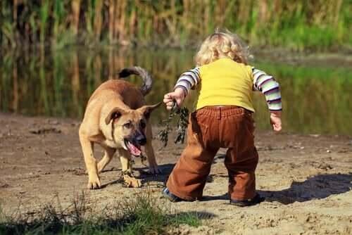 Et barn som leker med en hund.