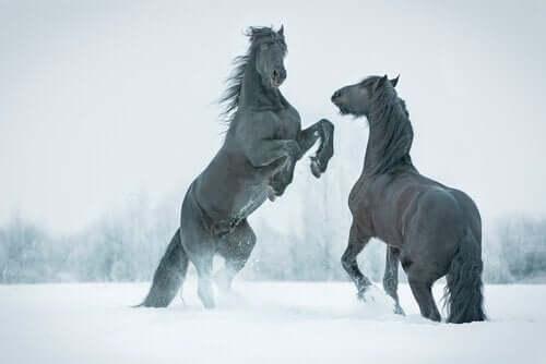 Frossen forhistorisk hest oppdaget i det gamle Siberia