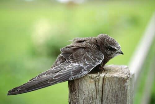 En babyfugl som sitter på en gren