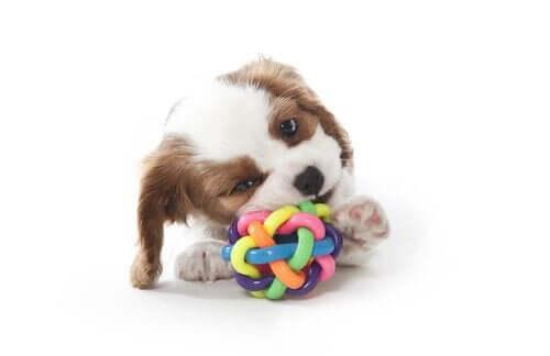 Fire tips for å finne en tyggeleke til hunden din