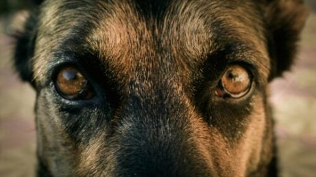 Hunder øyne