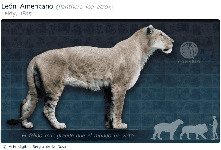 den amerikanske løven