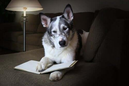 Hvordan forbedre hundens sosiale evner