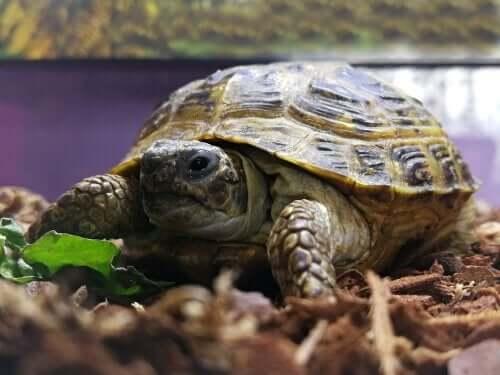 Lær å lage et terrarium til skilpadden din hjemme