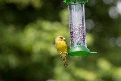 En fugl på en fuglemater