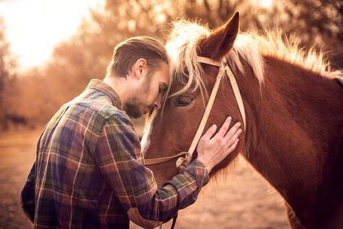 Slik vet du om hesten din elsker deg