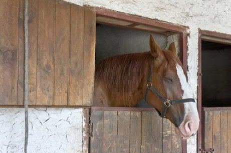 En hest som sover og står oppreist