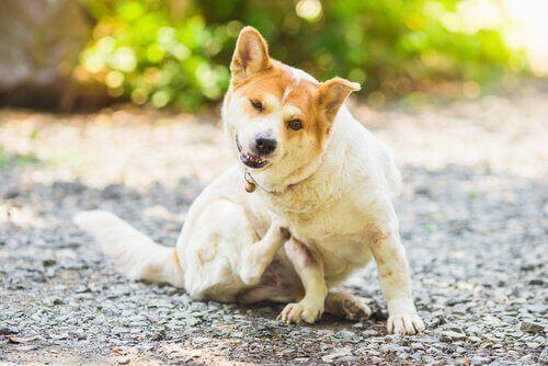 Slik forhindrer du parasitter hos hunder og katter