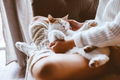 En katt som ligger på en persons fang