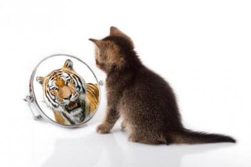 Likhetstrekk mellom katter og tigre
