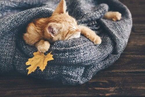 Katt sover i et pledd