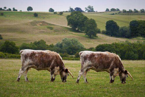 Kloning av dyr: Fordeler og ulemper