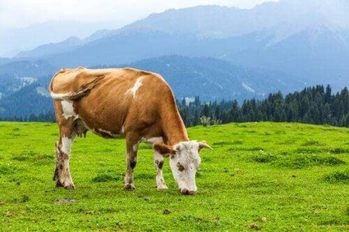 Den viktige rollen til planteetende dyr