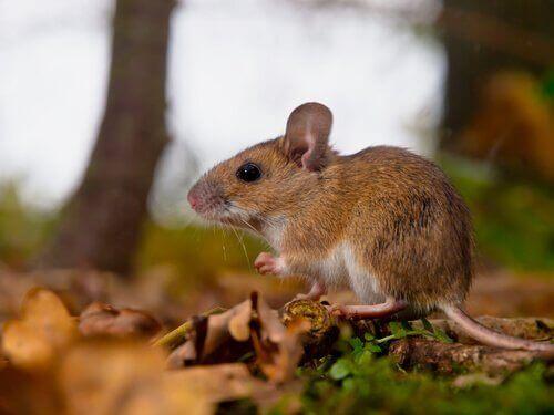 Hva er feromoner og hva er deres formål i dyreriket?
