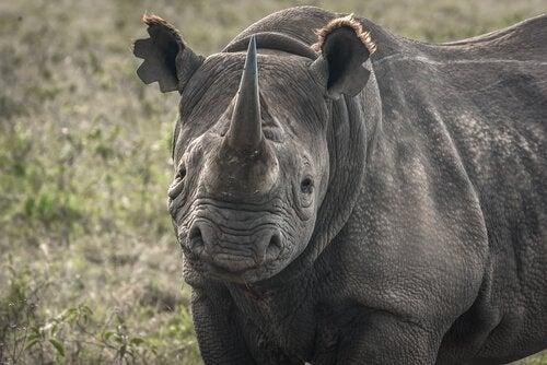 5 arter i verden som nesten er utryddet