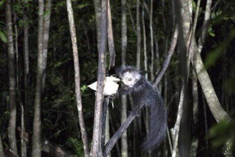 Fingerdyr hengende fra en gren
