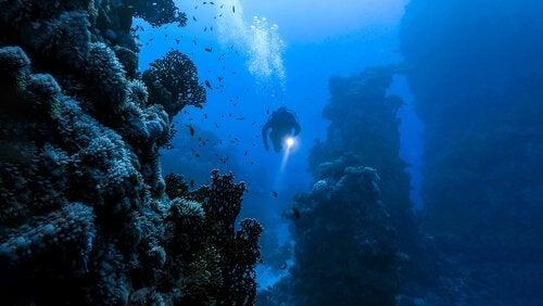 Eksisterer det insekter i havet?