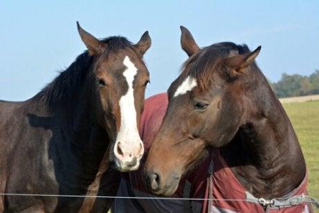 Stress hos hester er et reelt problem