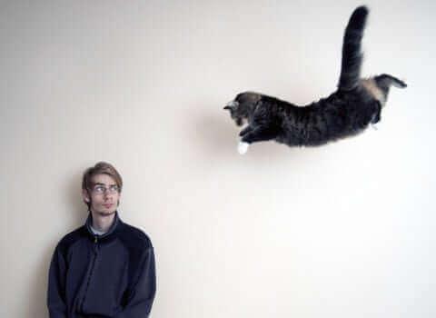 En katt som hopper mot en mann.