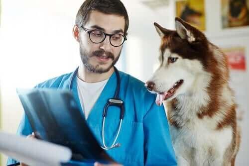 Hundesykdommer som er farlige for mennesker