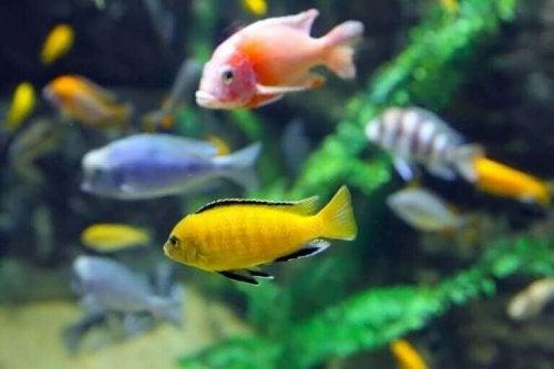 Hva er en forventet levealder for et akvarium?