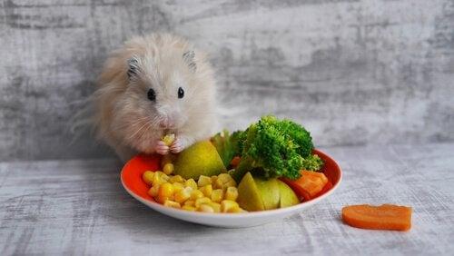 Hvilke sunne godbiter du kan gi til gnagere