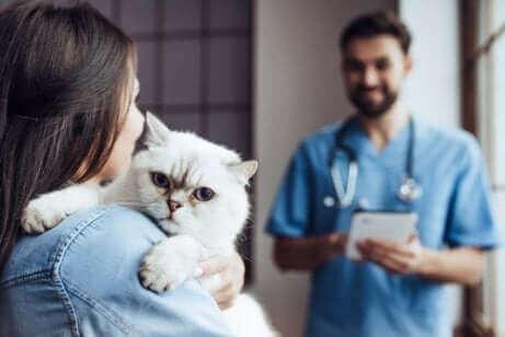 Vanlige kiropraktiske behandlinger for katter.