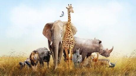 En representasjon av det afrikanske dyreriket