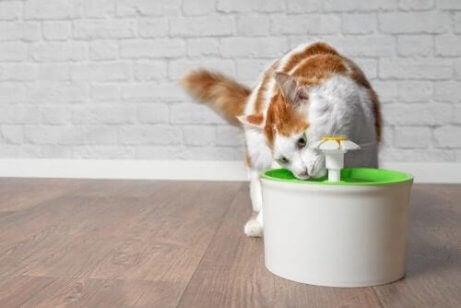 En katt som drikker vann fra en fontene.