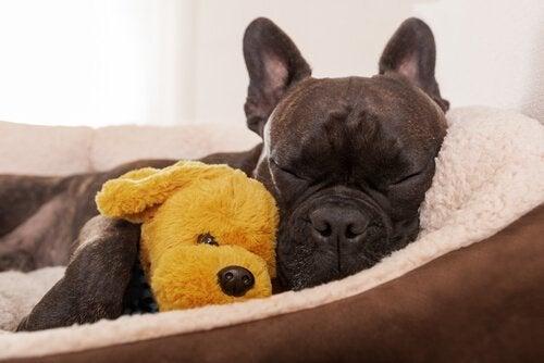 Skaff en konsultasjon hos en hundeetolog for hunden din