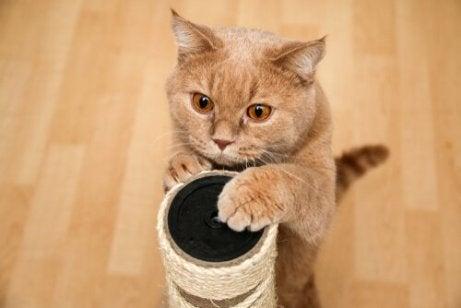 klorestativ er viktig for katter