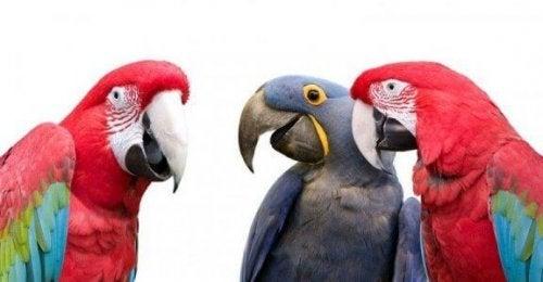 fargerike papegøyer