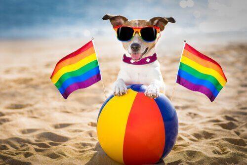 Finnes det homoseksuelle hunder?