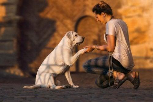 Hvordan kan jeg trene en døv hund?