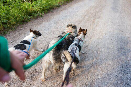 Tips for å jobbe som hundelufter