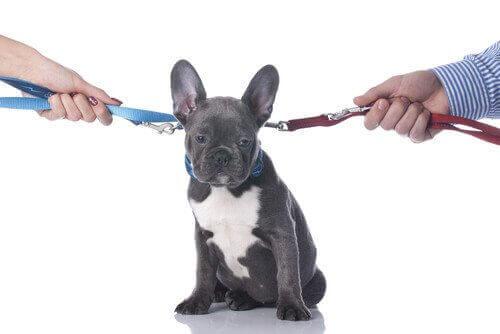 Separasjon eller skilsmisse: Hva vil skje med hunden min?