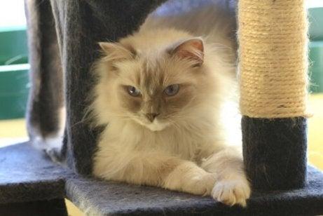 En katt som sitter ved siden av et klorestativ