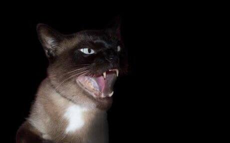 En skummel katt i mørket