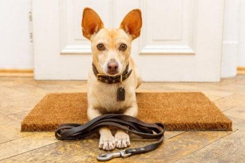 7 vanlige feil når man trener hunder