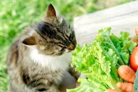 En katt som snuser på grønnsaker